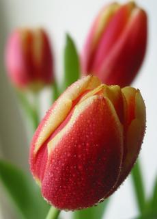 Het woord lente ...