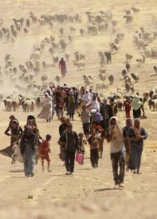 Jezidi