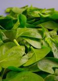 Spinazie die springstoffen of gif kan detecteren?