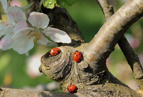 Lieveheersbeestjes: mooi weer en geluk.